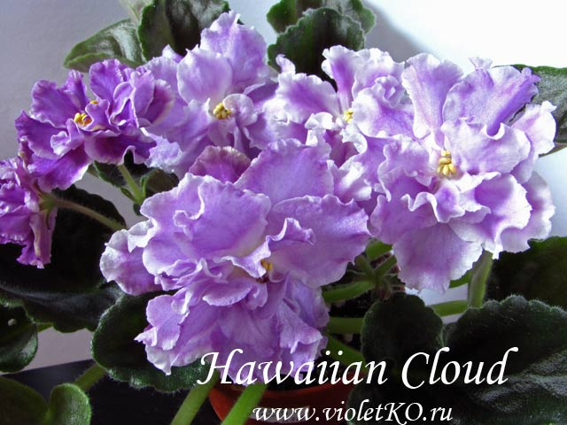 Hawaiian-Cloud1