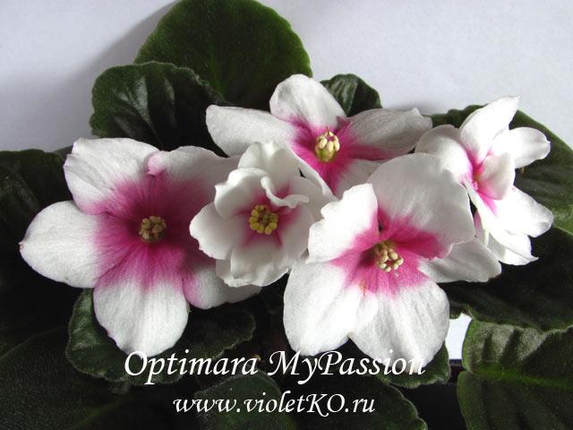 Optimara-MyPassion1
