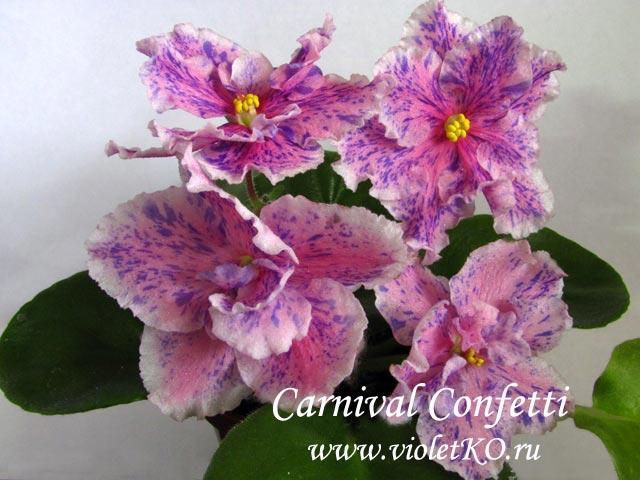 Carnival-Confetti